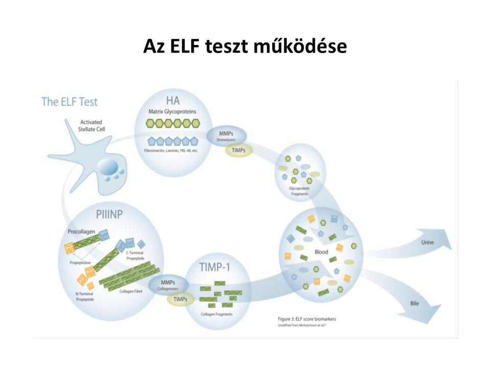 Az ELF teszt működése