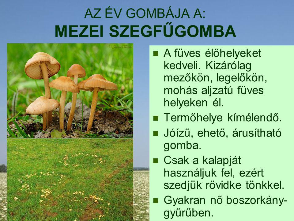 AZ ÉV GOMBÁJA A: MEZEI SZEGFŰGOMBA A füves élőhelyeket kedveli. Kizárólag mezőkön, legelőkön, mohás aljzatú füves helyeken él. Termőhelye kímélendő. J