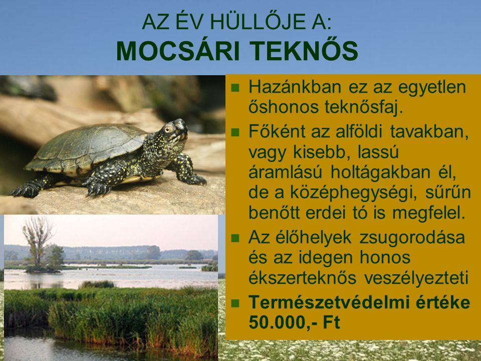 AZ ÉV HÜLLŐJE A: MOCSÁRI TEKNŐS Hazánkban ez az egyetlen őshonos teknősfaj. Főként az alföldi tavakban, vagy kisebb, lassú áramlású holtágakban él, de