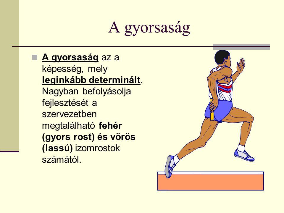 A gyorsaság A gyorsaság az a képesség, mely leginkább determinált. Nagyban befolyásolja fejlesztését a szervezetben megtalálható fehér (gyors rost) és