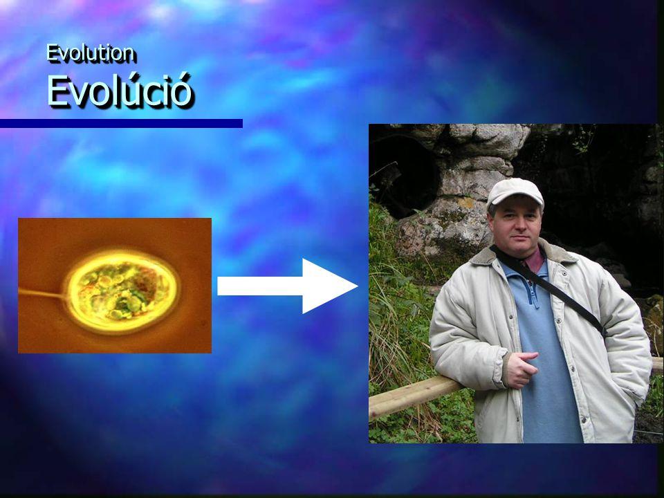 Evolution Evolúció