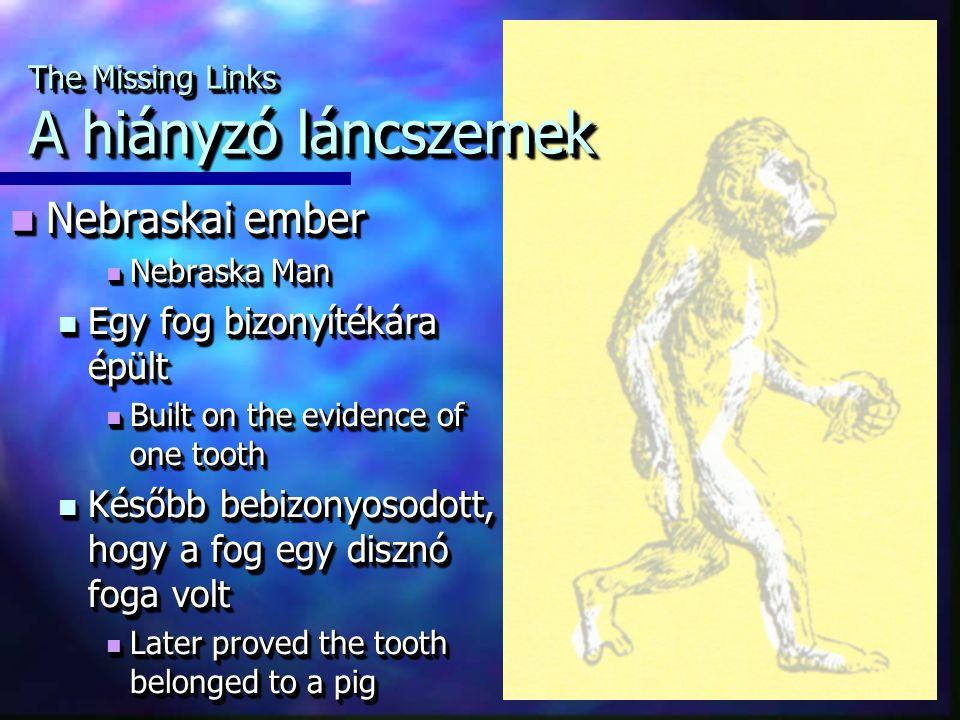 Nebraskai ember Nebraskai ember Nebraska Man Nebraska Man Egy fog bizonyítékára épült Egy fog bizonyítékára épült Built on the evidence of one tooth B