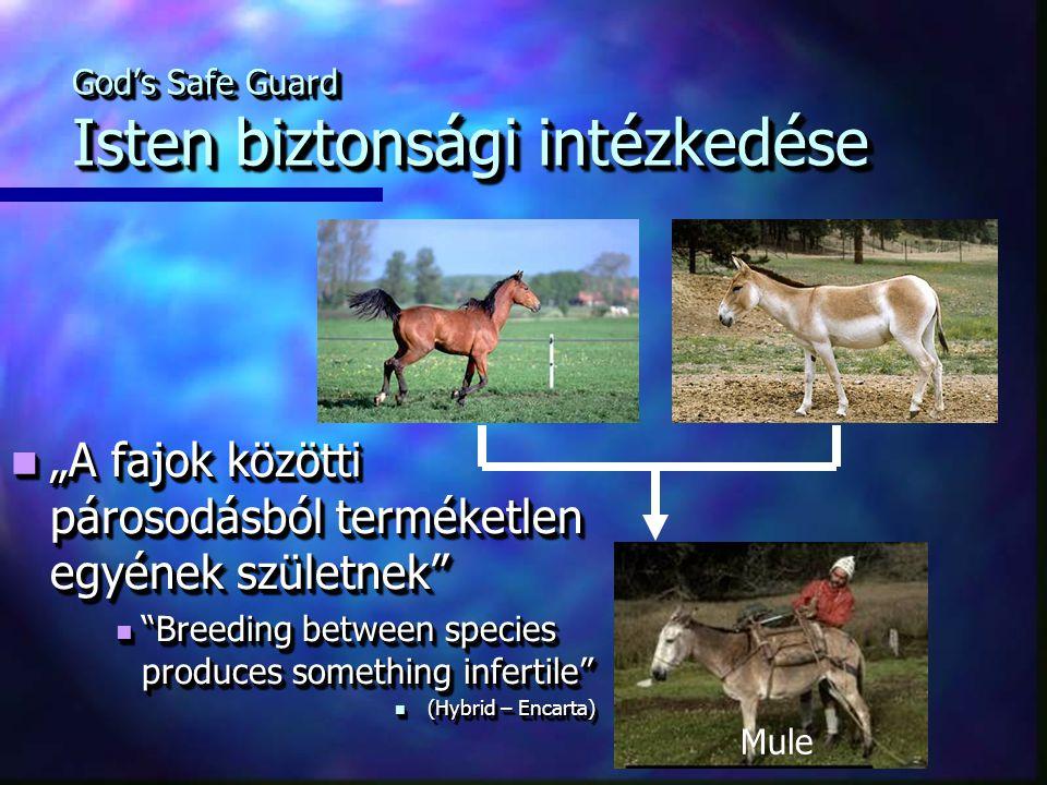 """God's Safe Guard Isten biztonsági intézkedése Mule """"A fajok közötti párosodásból terméketlen egyének születnek """"A fajok közötti párosodásból terméketlen egyének születnek Breeding between species produces something infertile Breeding between species produces something infertile (Hybrid – Encarta) (Hybrid – Encarta) """"A fajok közötti párosodásból terméketlen egyének születnek """"A fajok közötti párosodásból terméketlen egyének születnek Breeding between species produces something infertile Breeding between species produces something infertile (Hybrid – Encarta) (Hybrid – Encarta)"""