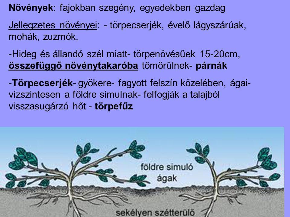 Növények: fajokban szegény, egyedekben gazdag Jellegzetes növényei: - törpecserjék, évelő lágyszárúak, mohák, zuzmók, -Hideg és állandó szél miatt- tö