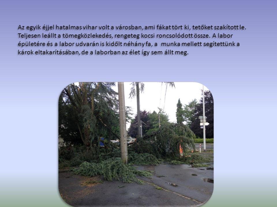 Az egyik éjjel hatalmas vihar volt a városban, ami fákat tört ki, tetőket szakított le. Teljesen leállt a tömegközlekedés, rengeteg kocsi roncsolódott
