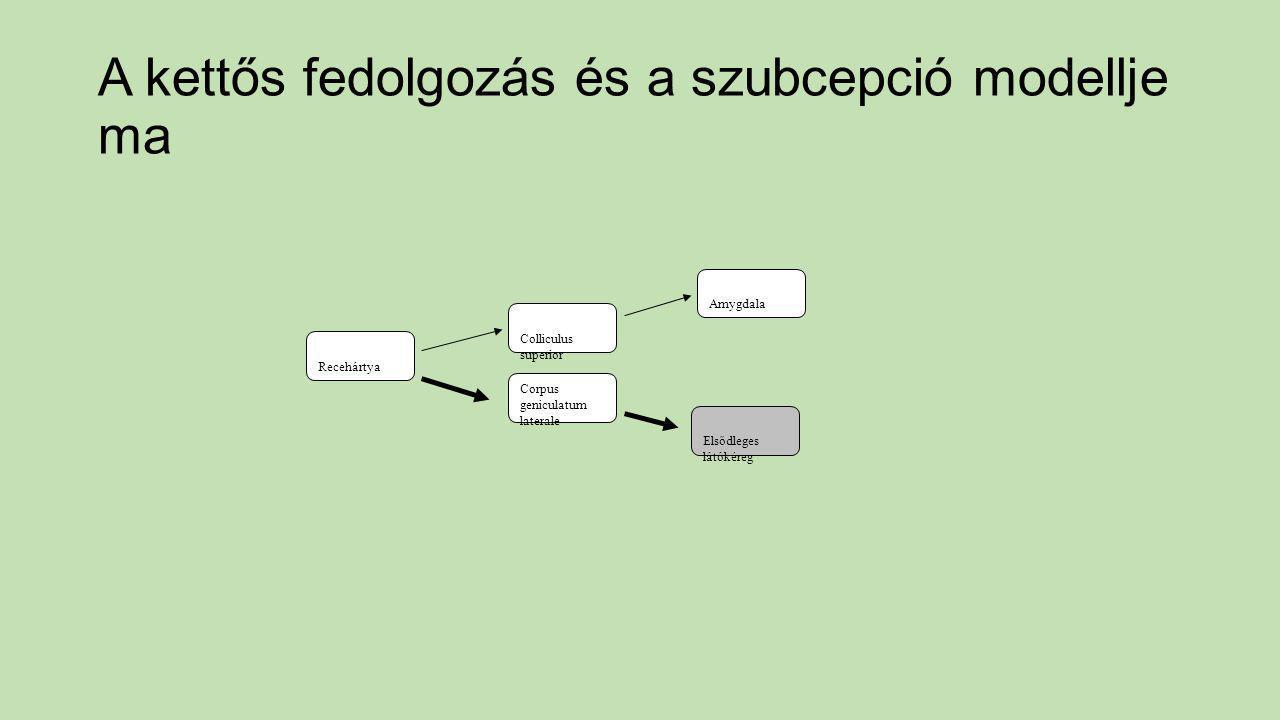 Recehártya Colliculus superior Amygdala Corpus geniculatum laterale Elsődleges látókéreg A kettős fedolgozás és a szubcepció modellje ma