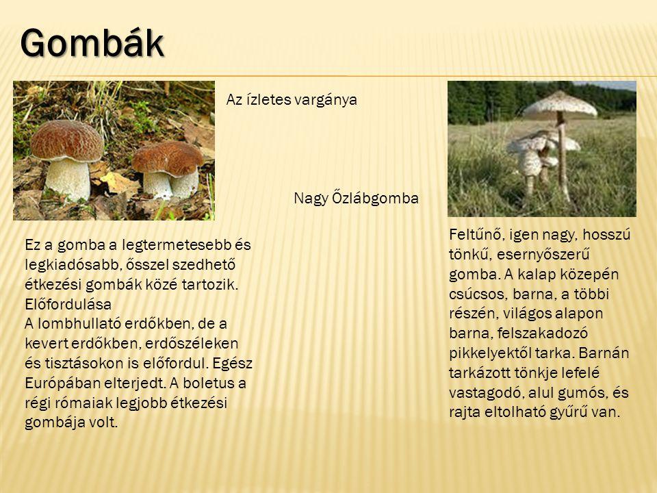 Gombák Nagy Őzlábgomba Az ízletes vargánya Feltűnő, igen nagy, hosszú tönkű, esernyőszerű gomba. A kalap közepén csúcsos, barna, a többi részén, világ