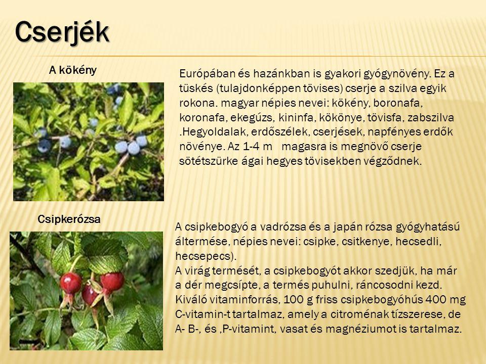 Cserjék Európában és hazánkban is gyakori gyógynövény. Ez a tüskés (tulajdonképpen tövises) cserje a szilva egyik rokona. magyar népies nevei: kökény,