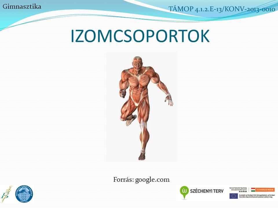 IZOMCSOPORTOK Gimnasztika Forrás: google.com