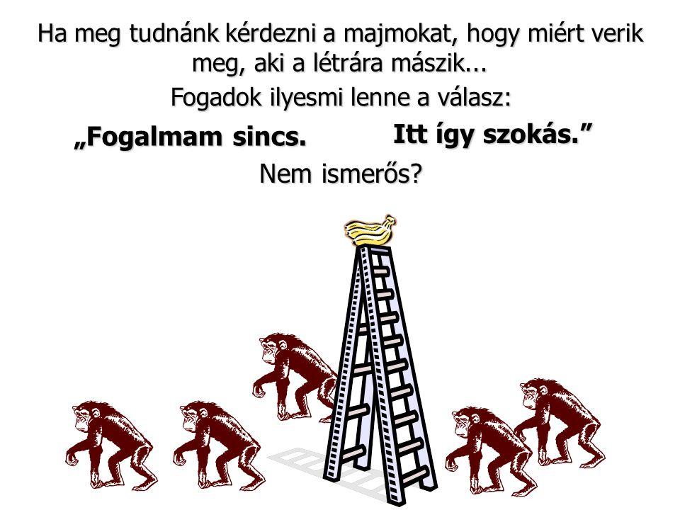 """Ha meg tudnánk kérdezni a majmokat, hogy miért verik meg, aki a létrára mászik... Nem ismerős? Fogadok ilyesmi lenne a válasz: """"Fogalmam sincs. Itt íg"""