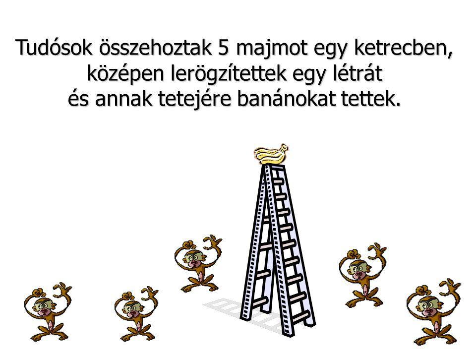 Tudósok összehoztak 5 majmot egy ketrecben, középen lerögzítettek egy létrát és annak tetejére banánokat tettek.