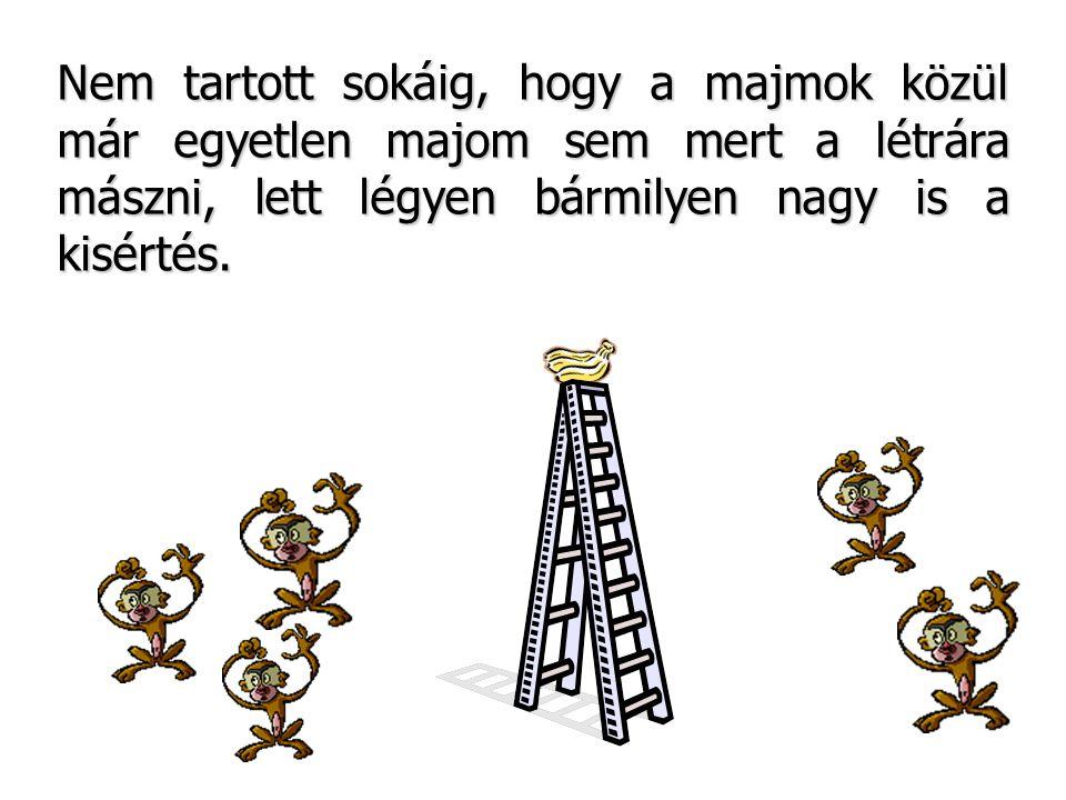 Nem tartott sokáig, hogy a majmok közül már egyetlen majom sem mert a létrára mászni, lett légyen bármilyen nagy is a kisértés.