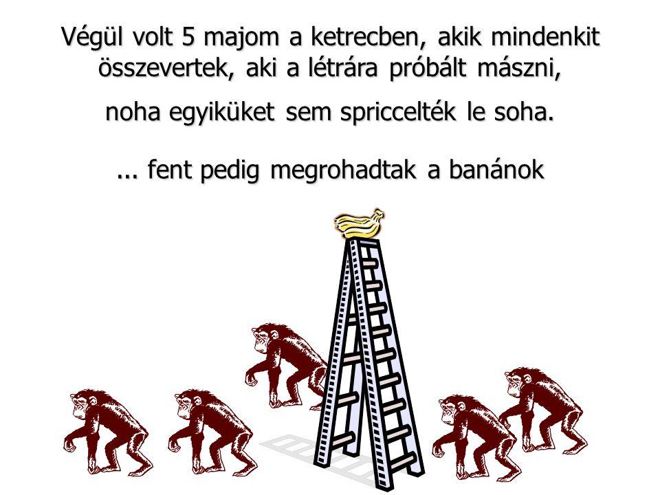 Végül volt 5 majom a ketrecben, akik mindenkit összevertek, aki a létrára próbált mászni,... fent pedig megrohadtak a banánok noha egyiküket sem spric