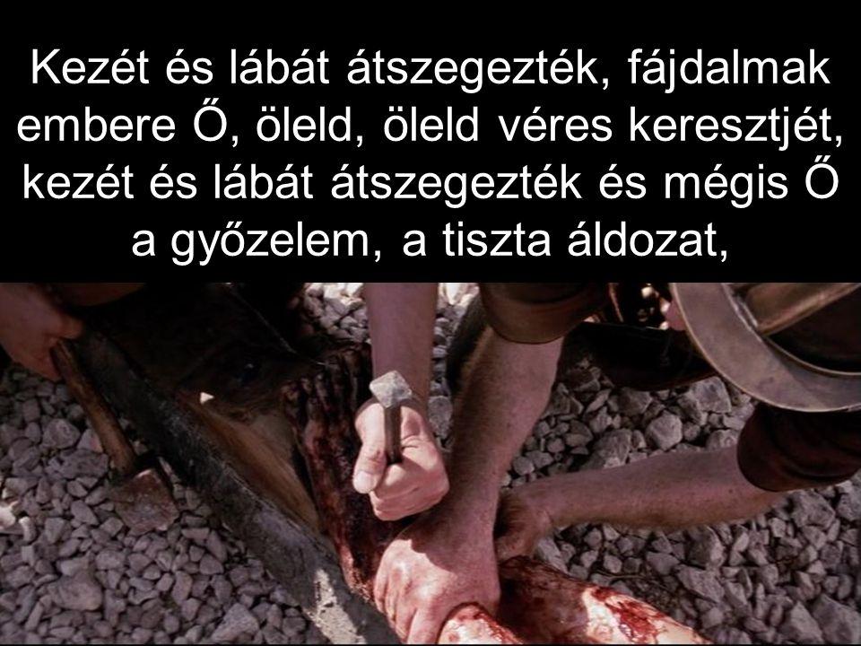 Kezét és lábát átszegezték, fájdalmak embere Ő, öleld, öleld véres keresztjét, kezét és lábát átszegezték és mégis Ő a győzelem, a tiszta áldozat,