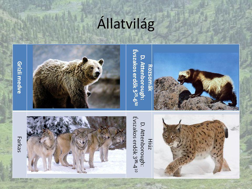 Állatvilág Grízli medve Rozsomák D. Attenborough: Évszakos erdők 5 25 -6 50 Farkas Hiúz D. Attenborough: Évszakos erdők 3 35 -4 10