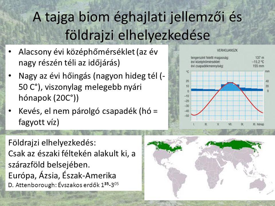A tajga biom éghajlati jellemzői és földrajzi elhelyezkedése Alacsony évi középhőmérséklet (az év nagy részén téli az időjárás) Nagy az évi hőingás (n