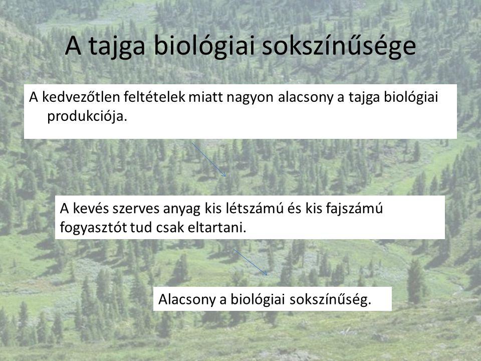 A tajga biológiai sokszínűsége A kedvezőtlen feltételek miatt nagyon alacsony a tajga biológiai produkciója. A kevés szerves anyag kis létszámú és kis