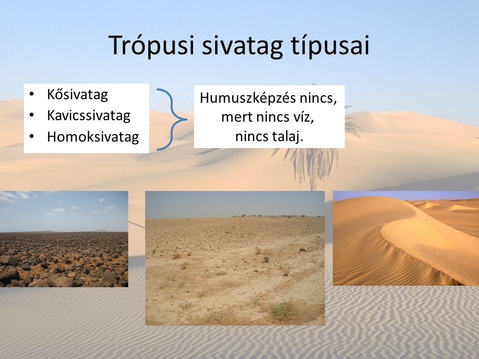 Trópusi sivatag típusai Kősivatag Kavicssivatag Homoksivatag Humuszképzés nincs, mert nincs víz, nincs talaj.