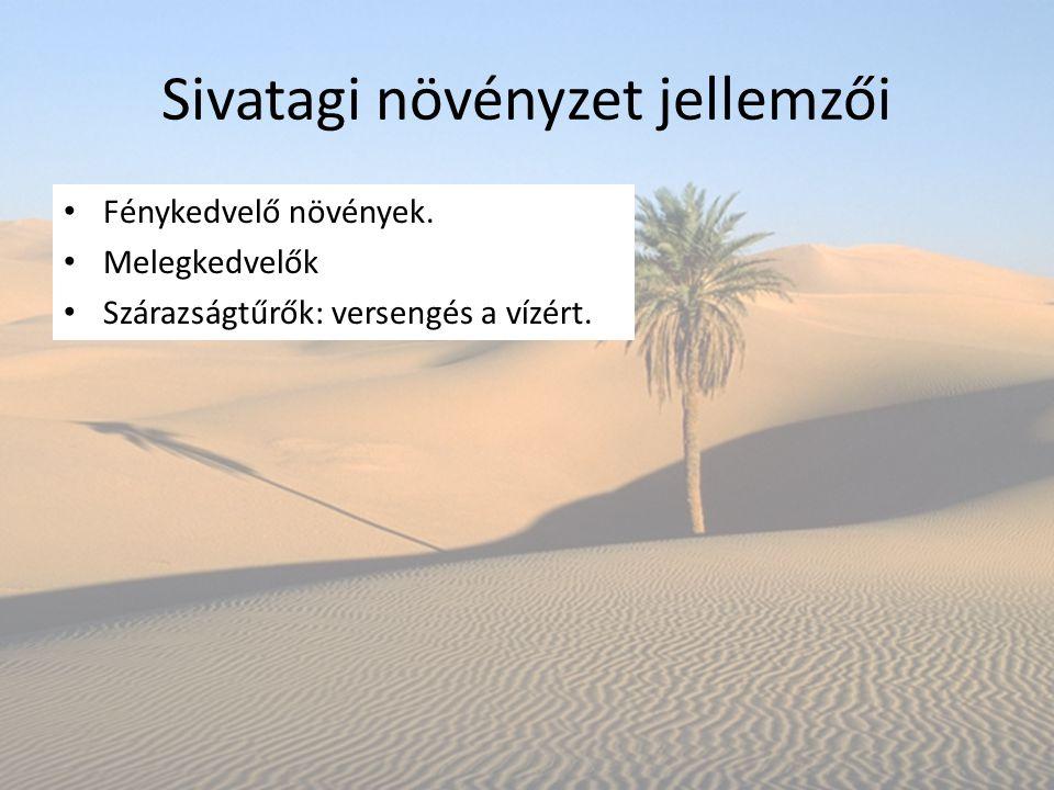 Sivatagi növényzet jellemzői Fénykedvelő növények. Melegkedvelők Szárazságtűrők: versengés a vízért.