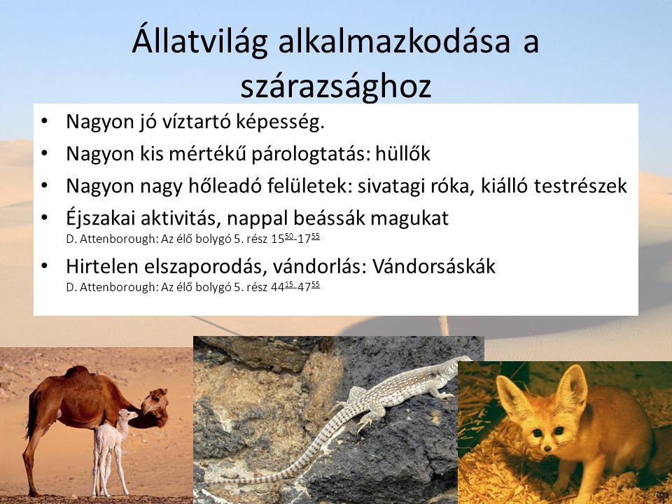 Állatvilág alkalmazkodása a szárazsághoz Nagyon jó víztartó képesség. Nagyon kis mértékű párologtatás: hüllők Nagyon nagy hőleadó felületek: sivatagi