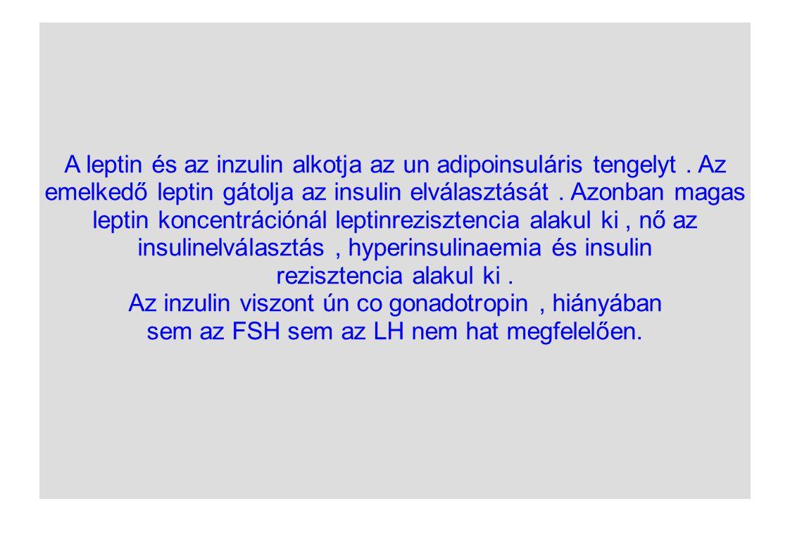 A leptin és az inzulin alkotja az un adipoinsuláris tengelyt. Az emelkedő leptin gátolja az insulin elválasztását. Azonban magas leptin koncentrációná
