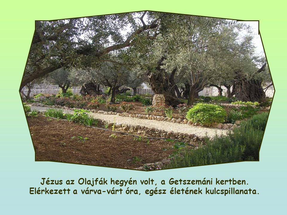Jézus az Olajfák hegyén volt, a Getszemáni kertben.