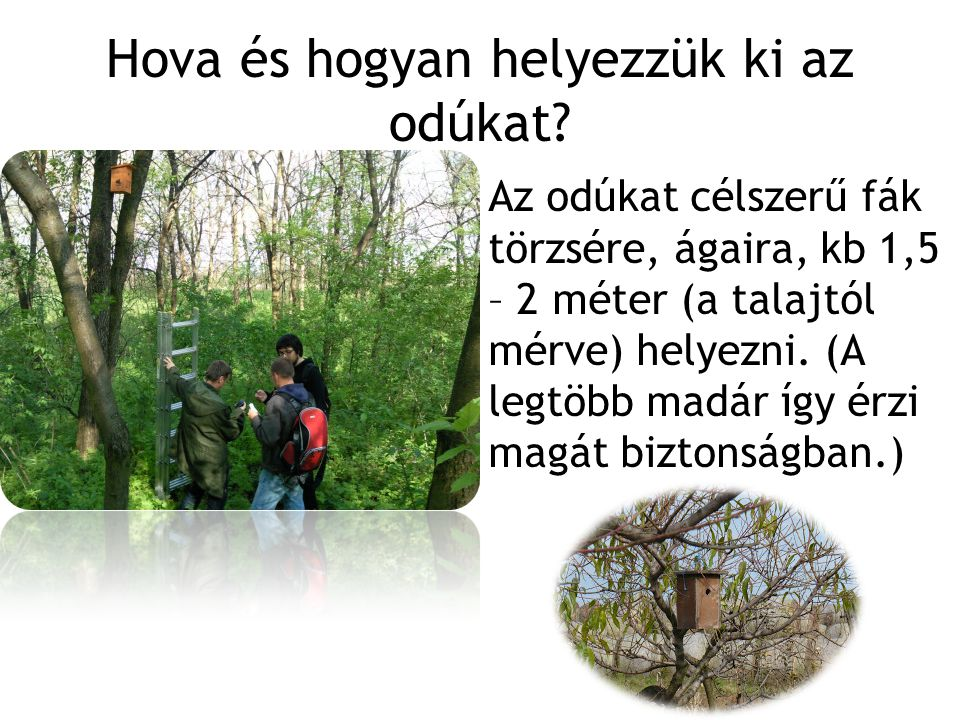 Hova és hogyan helyezzük ki az odúkat? Az odúkat célszerű fák törzsére, ágaira, kb 1,5 – 2 méter (a talajtól mérve) helyezni. (A legtöbb madár így érz