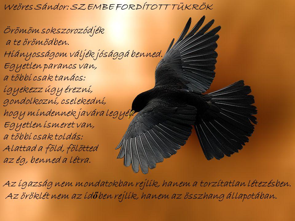Testünk alá van vetve az égnek, az ég alá van vetve szellemünknek (Leonardo da Vinci)