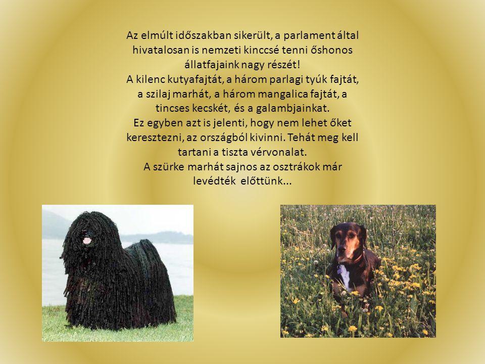 Az elmúlt időszakban sikerült, a parlament által hivatalosan is nemzeti kinccsé tenni őshonos állatfajaink nagy részét! A kilenc kutyafajtát, a három
