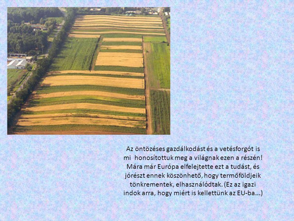 Az öntözéses gazdálkodást és a vetésforgót is mi honosítottuk meg a világnak ezen a részén! Mára már Európa elfelejtette ezt a tudást, és jórészt enne