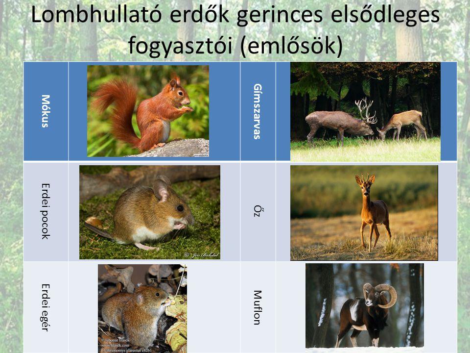 Lombhullató erdők gerinces elsődleges fogyasztói (emlősök) Mókus Gímszarvas Erdei pocok Őz Erdei egér Muflon