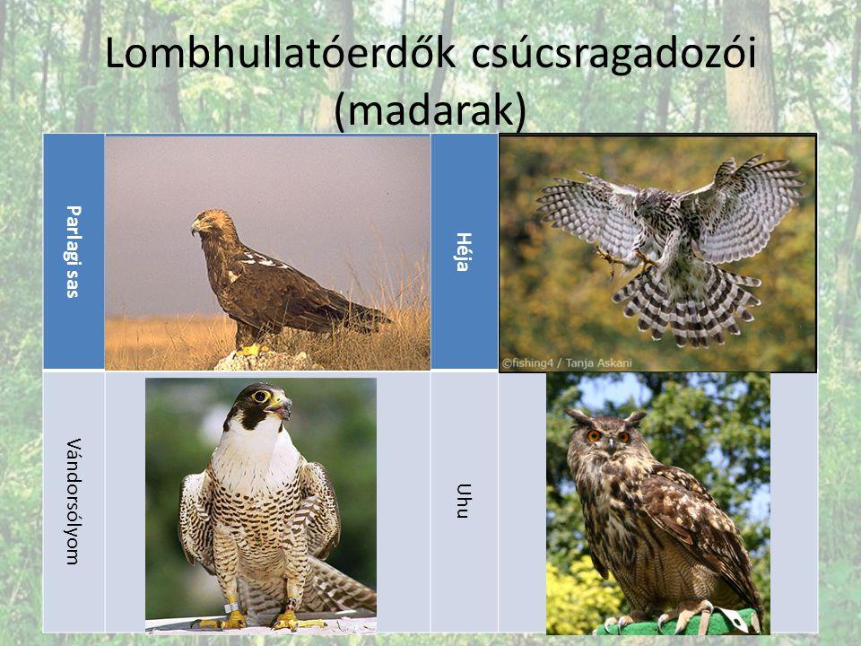 Lombhullatóerdők csúcsragadozói (madarak) Parlagi sas Héja Vándorsólyom Uhu