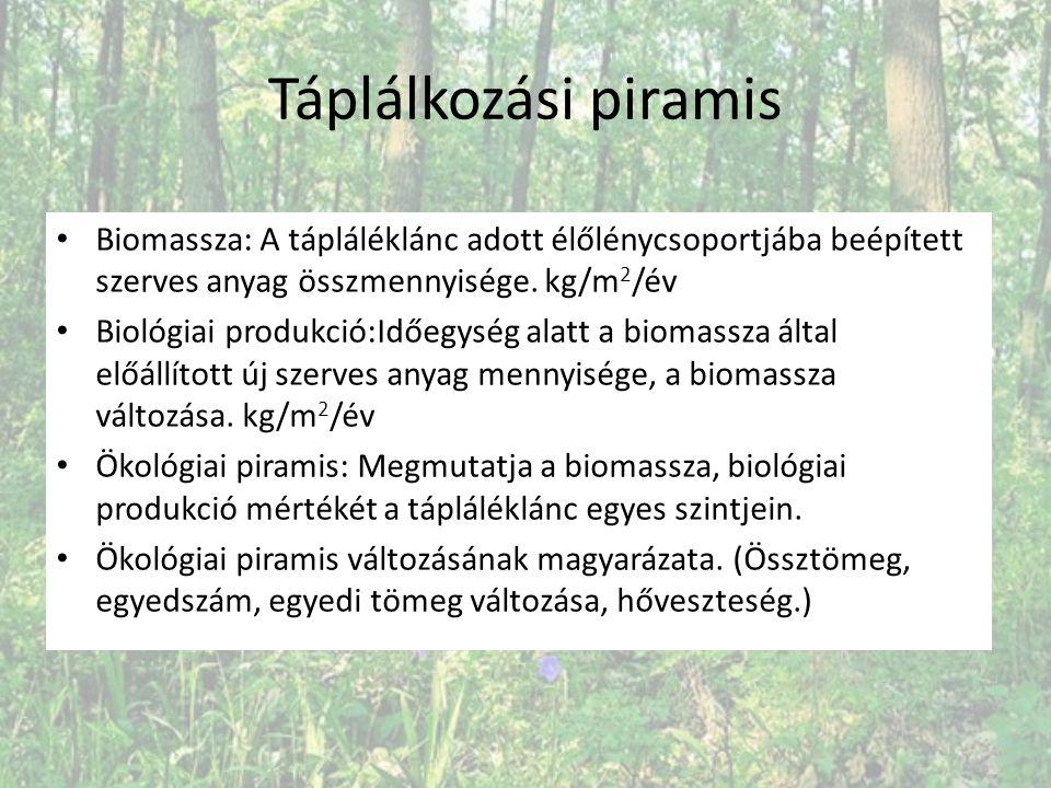 Táplálkozási piramis Biomassza: A tápláléklánc adott élőlénycsoportjába beépített szerves anyag összmennyisége. kg/m 2 /év Biológiai produkció:Időegys