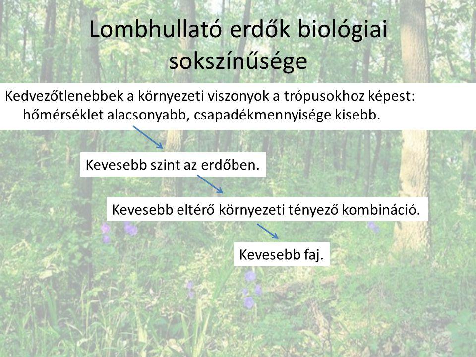 Lombhullató erdők biológiai sokszínűsége Kedvezőtlenebbek a környezeti viszonyok a trópusokhoz képest: hőmérséklet alacsonyabb, csapadékmennyisége kis