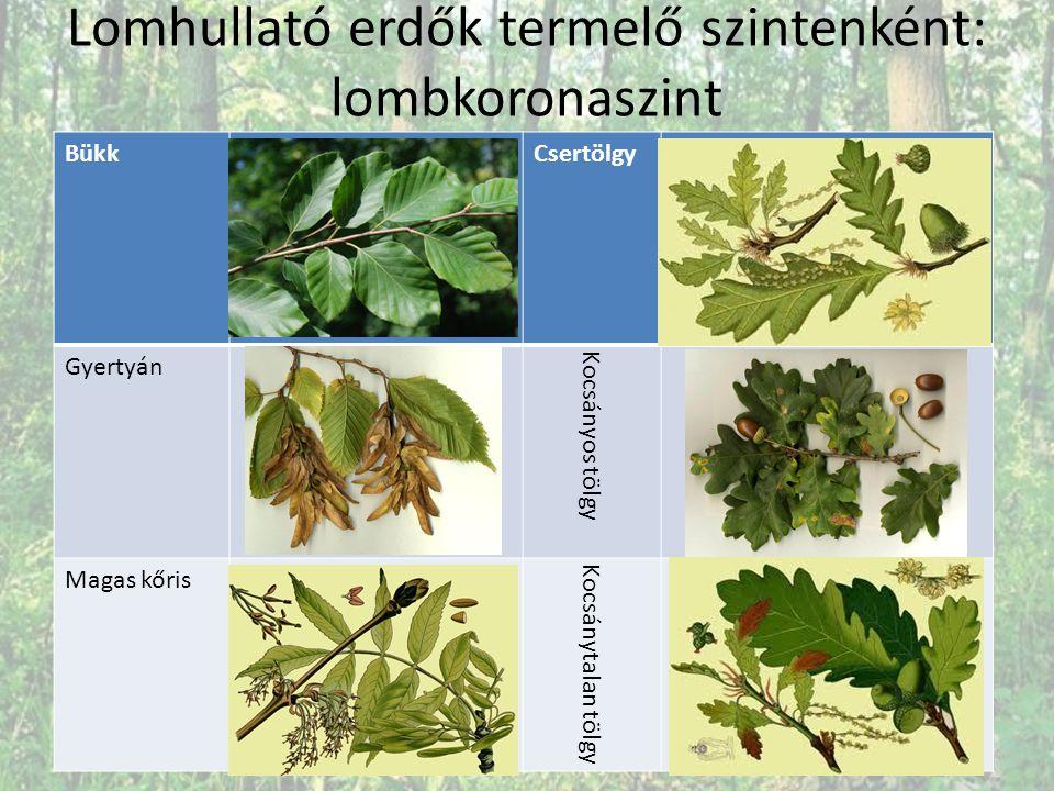 Táplálkozási piramis Biomassza: A tápláléklánc adott élőlénycsoportjába beépített szerves anyag összmennyisége.