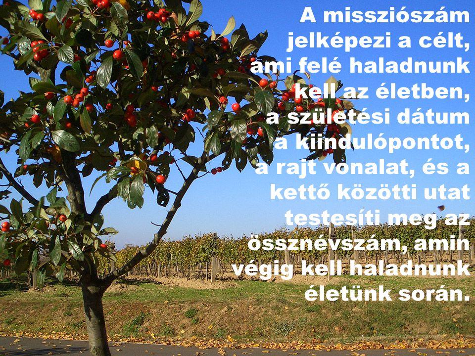 A missziószám jelképezi a célt, ami felé haladnunk kell az életben, a születési dátum a kiindulópontot, a rajt vonalat, és a kettő közötti utat testes