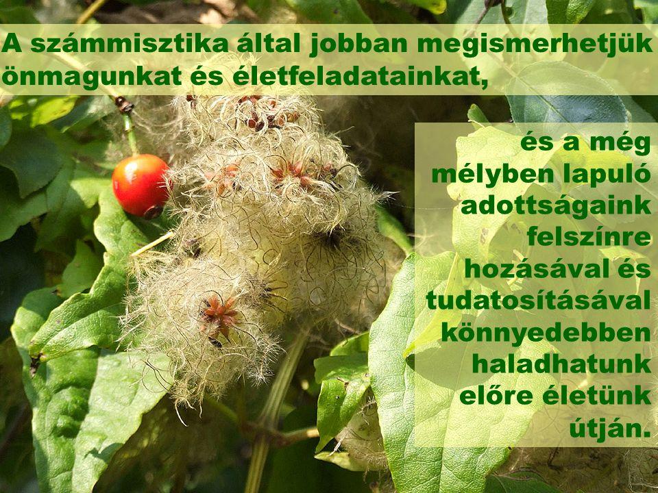 Szeretettel várok minden érdeklődőt: Kiss Beáta További információ és megrendelés: 06-20/386-0571 kiss.beata@grafobuvar.hu www.grafobuvar.hu