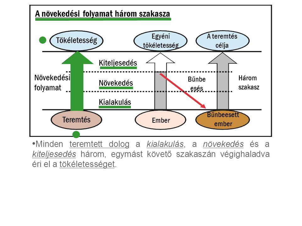 A növekedési folyamat három szakasza Minden teremtett dolog a kialakulás, a növekedés és a kiteljesedés három, egymást követő szakaszán végighaladva é