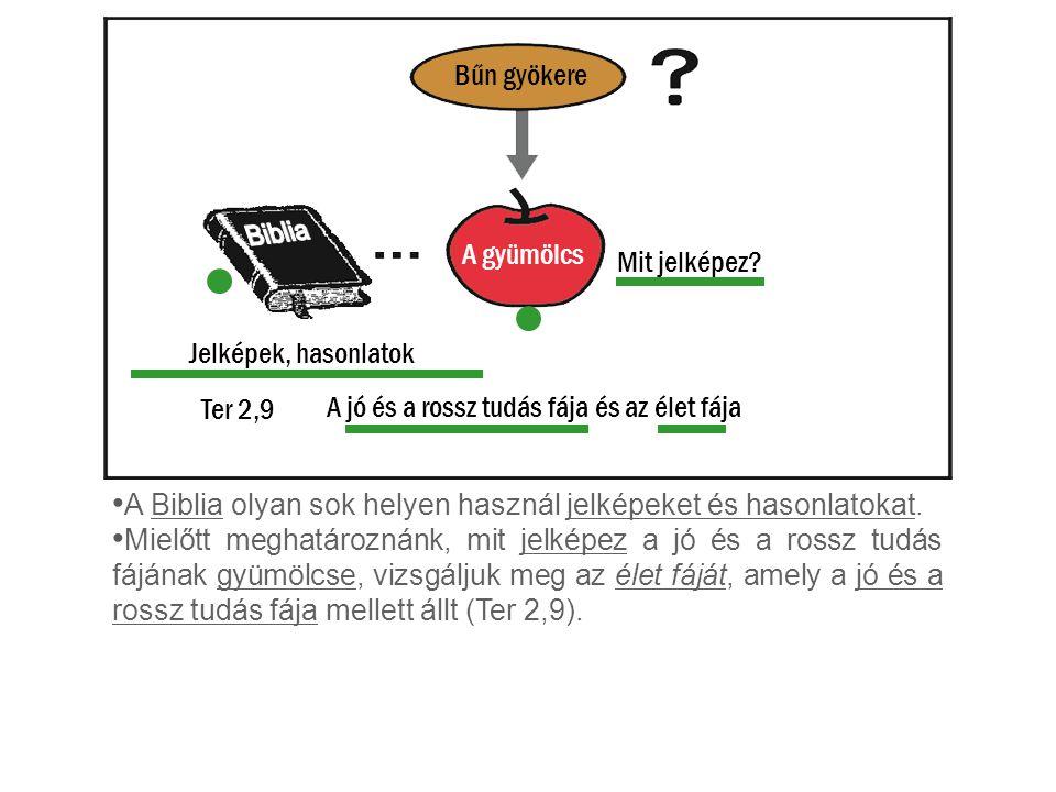 A gyümölcs Bűn gyökere A Biblia olyan sok helyen használ jelképeket és hasonlatokat. Mielőtt meghatároznánk, mit jelképez a jó és a rossz tudás fájána