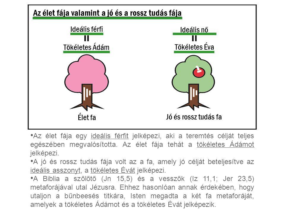 Az élet fája valamint a jó és a rossz tudás fája Az élet fája egy ideális férfit jelképezi, aki a teremtés célját teljes egészében megvalósította. Az