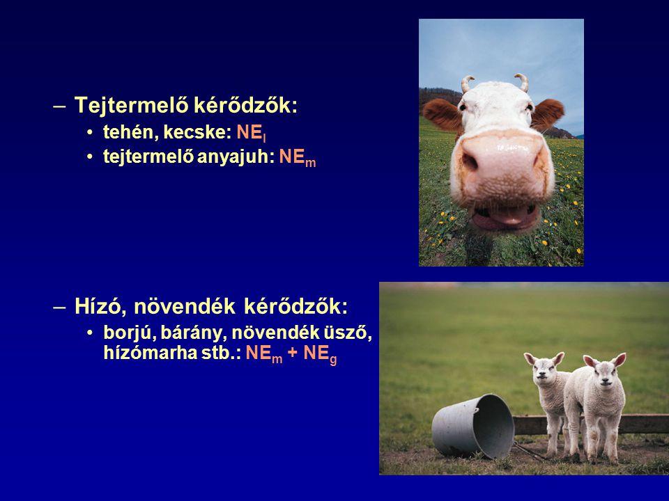 –Tejtermelő kérődzők: tehén, kecske: NE l tejtermelő anyajuh: NE m –Hízó, növendék kérődzők: borjú, bárány, növendék üsző, hízómarha stb.: NE m + NE g