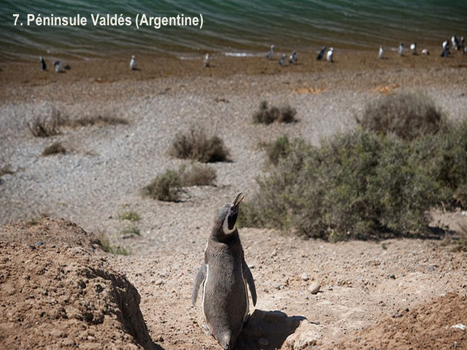 6. Lac Nahuel Huapi + forêt des Arrayanes (Argentina)