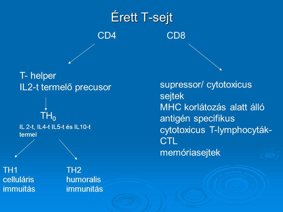Érett T-sejt CD8CD4 T- helper IL2-t termelő precusor TH 0 IL 2-t, IL4-t IL5-t és IL10-t termel TH1 celluláris immuitás TH2 humoralis immunitás supress