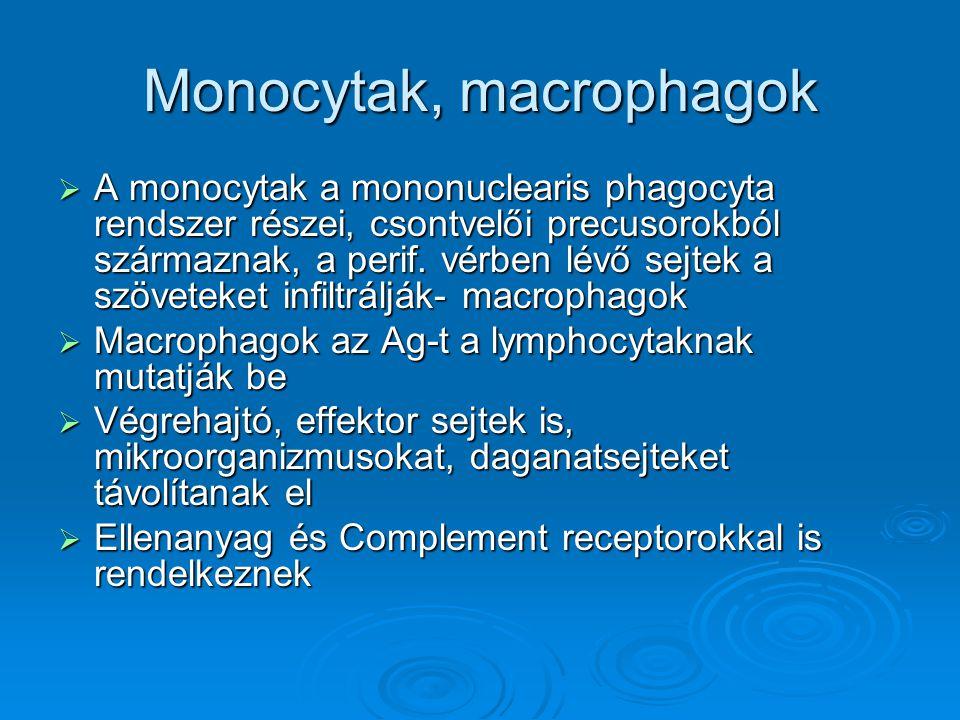 Monocytak, macrophagok  A monocytak a mononuclearis phagocyta rendszer részei, csontvelői precusorokból származnak, a perif. vérben lévő sejtek a szö