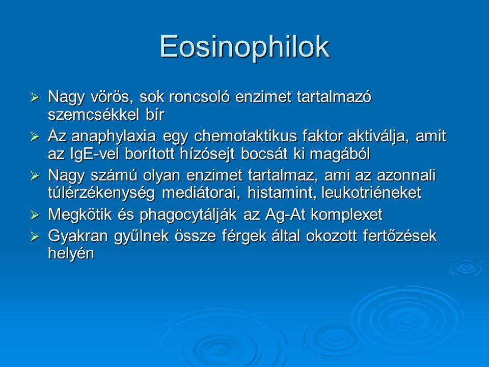 Eosinophilok  Nagy vörös, sok roncsoló enzimet tartalmazó szemcsékkel bír  Az anaphylaxia egy chemotaktikus faktor aktiválja, amit az IgE-vel boríto