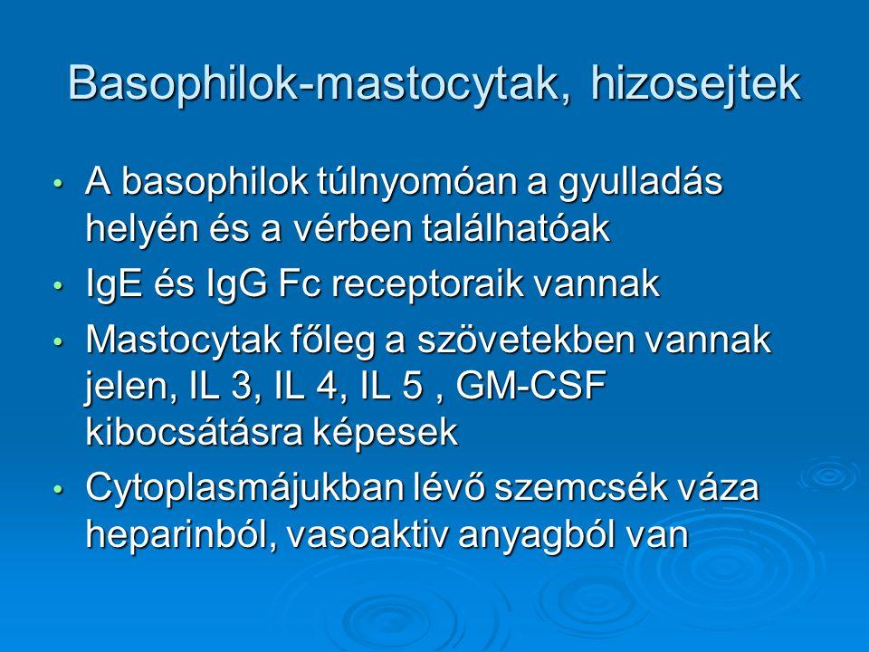 Basophilok-mastocytak, hizosejtek A basophilok túlnyomóan a gyulladás helyén és a vérben találhatóak A basophilok túlnyomóan a gyulladás helyén és a v