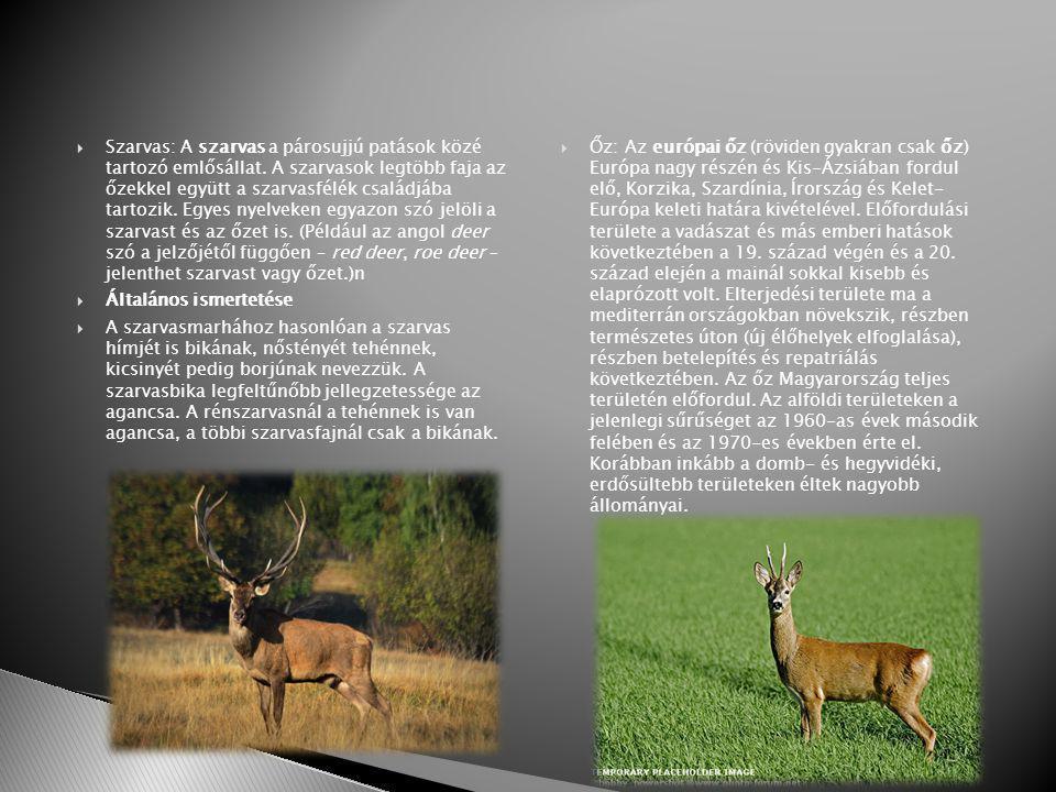  Szarvas: A szarvas a párosujjú patások közé tartozó emlősállat.