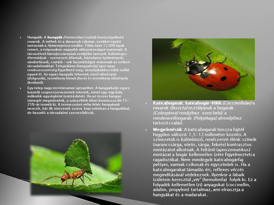  Hangyák: A hangyák (Formicidae) család) közösségalkotó rovarok.