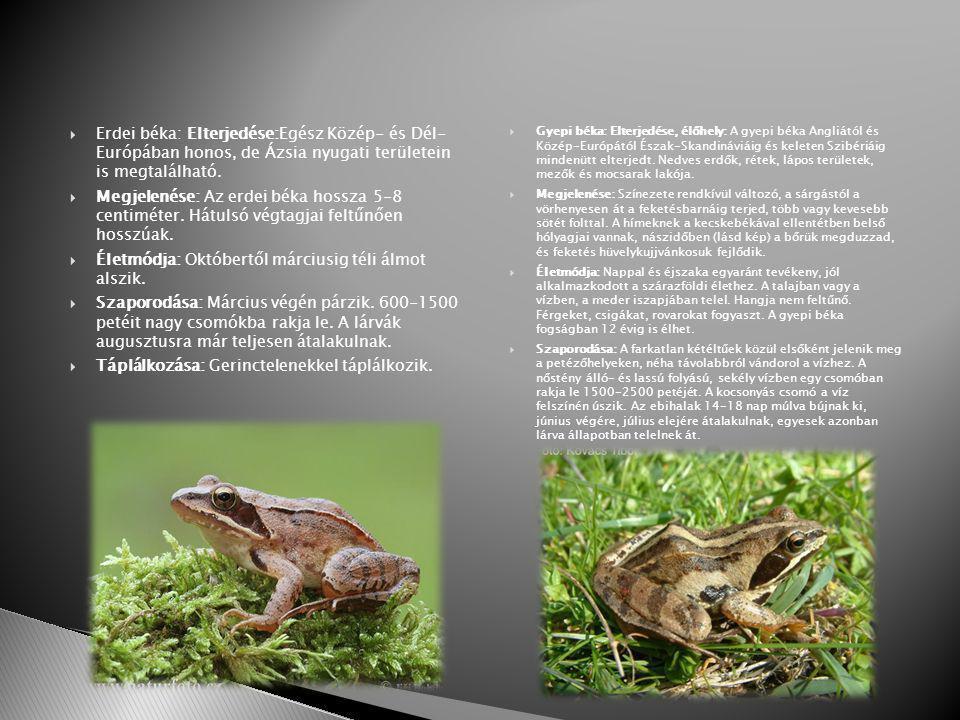  Erdei béka: Elterjedése:Egész Közép- és Dél- Európában honos, de Ázsia nyugati területein is megtalálható.