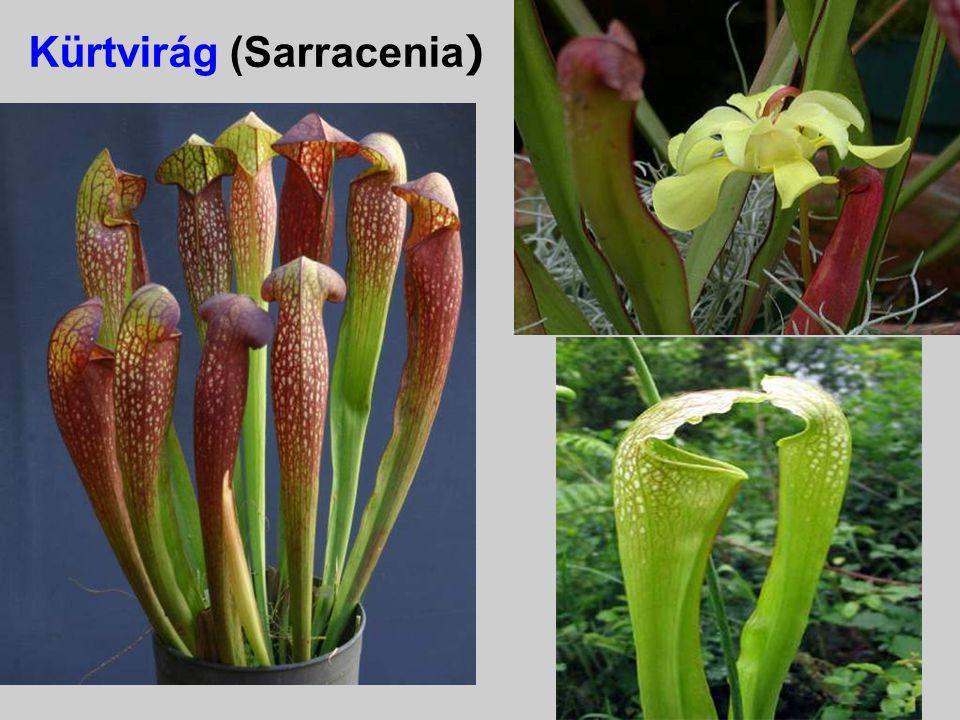 A Sarracenia, Darlingtonia, Cephalotus tömlői és valószínűleg az Utricularia hólyagjai enzimet nem választanak ki, vagyis ezek nem emésztik meg a rova